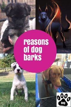 Many Useful Hints About Dog Barking You Would Like #dogbarking Stop Dog Barking, Love Pet, Pets, Animals, Animales, Animaux, Animal, Animais, Animals And Pets