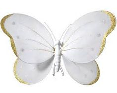 butterfly pictures - Yahoo Image Search Results