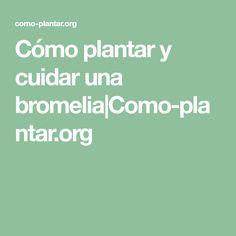 Cómo plantar y cuidar una bromelia|Como-plantar.org