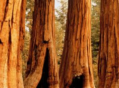 There's more to do in California's Sequoia and Kings Canyon National Parks than admire the big trees, even though that should be your first priority, since the Sierra Nevada is the only place in the world where the giant sequoias naturally grow. [Photo by Ken Biggs, Getty Images]