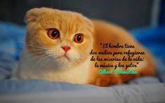 El hombre tiene dos medios para refugiarse de las miserias de la vida. La música y los gatos. Albert Schweitzer.
