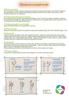 Growing Plants, Indoor Plants, Backyard, Gardens, Garden Ideas, Inside Plants, Patio, Outdoor Gardens, Backyards