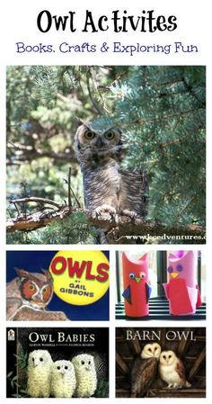 Wonderful list of books, crafts & hands-on activities. Perfect for a early childhood theme on owls!