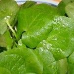 Lettuce, Spinach, Plant Leaves, Flora, Herbs, Stuffed Peppers, Vegetables, Health, Garden