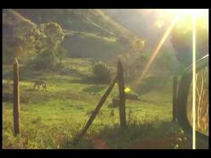 Cavalo no campo - YouTube