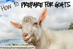"""So you decided to get the awesomest animal on earth. Goats. There's really no need to buy all those """"extras."""" How to prepare for goats and what they really need."""