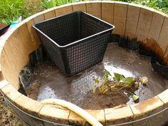 Transformation d'une demi barrique en bassin - Santonine - Plantes aquatiques