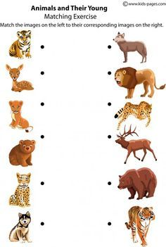 Crafts,Actvities and Worksheets for Preschool,Toddler and Kindergarten.Lots of worksheets and coloring pages. Animal Worksheets, Animal Activities, Preschool Worksheets, Animal Crafts, Preschool Activities, Jungle Animals, Baby Animals, Animals And Their Babies, Animal Babies