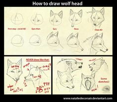 Wolf head tutorial by NatalieDeCorsair on DeviantArt
