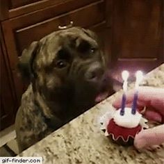 Dog Blows Out Birthday Candles