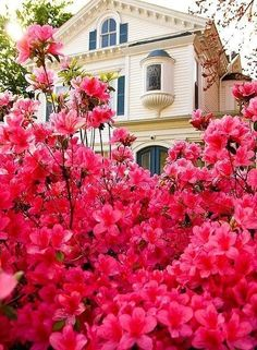 home, flowers