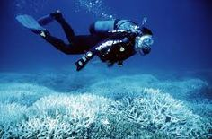 Resultado de imagen para buzos marinos