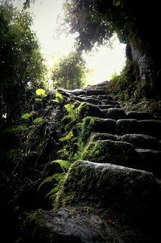 Stone steps. Inka Trail, Peru. Shot and edit by Monica Mikhael.