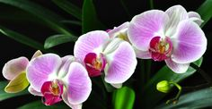 Orchids and Clivia. Planting Flowers, Paradis, Diy, Gardening, Health, Fitness, House, Tulips, Daisies