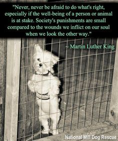 Martin Luther King / Welfare Compassion Animal Quote Be a guardian of animals…