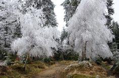 Prawie że góry: grudnia 2014