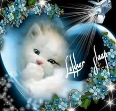 Lekker slaap Cute Cats And Kittens, Baby Cats, Kittens Cutest, Good Night Cat, Cute Good Night, Cute Cat Gif, Cute Funny Animals, Cute Animal Drawings Kawaii, Butterfly Pictures