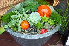 Planters You'll Love - Succulent planter with orange glass balls. North West Flower and Garden ShowSucculent planter with orange glass balls. North West Flower and Garden Show Succulents In Containers, Cacti And Succulents, Planting Succulents, Growing Succulents, Container Flowers, Container Plants, Succulent Display, Succulent Planter Diy, Indoor Planters