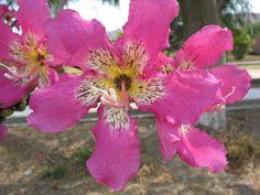 flor palo borracho - Buscar con Google
