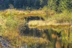 Color print of Wetlands in Adirondacks