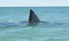Malaria, freak storms and great white sharks: what may lie ahead ...