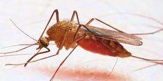 MULLACLICK  Jr.: Chanjo ya Malaria yatia matumaini
