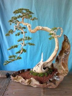 Bonsai by maria.interest