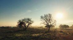 Según los #bogomiolos existe dos árboles de la conciencia humana uno de bien y mal y otro solo de bien absoluto. La humanidad se nutre de lo primero y sigue sin poder recuperar la posibilidad nutrirse de lo segundo. Aquel que está más cerca de sol me párese de bien absoluto.  #nature #naturaleza #meditación #iluminacion #inspiration #contemplation #contemplación #vsco #vscocam #árbol