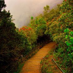 Timpohon Gate, Mount Kinabalu Sabah Malaysia North Borneo, Timpohon Gate is the starting point for climbers to climb Mount Kinabalu. Stairway To Heaven, Walk This Way, Pathways, Stairways, The Great Outdoors, Wonders Of The World, Places To See, Cool Pictures, Beautiful Places