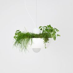 lighting well light hanging fixture one of kind planter decor plant indoor garden herbs succulents contemporary Ramsin Khachi gardener gift ideas plants pendant Herb Garden, Indoor Garden, Indoor Plants, Light Well, Decorative Planters, Gras, Garden Gifts, Hanging Lights, Accent Pieces