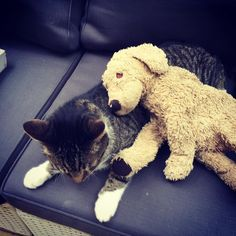 On this rainy day - - I am chilling with SUNNY. Sunny is the name of the cat. Like this the rain is bearable. . . #fluffyfriends #sunny #furryfriends #kuscheltierliebe #dogsandcats #dogsofberlin #lovelauglobilat #hundeleben #plushiesofinstagram