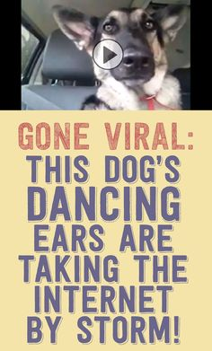Watch this dog's dancing ears as he listens to the radio!