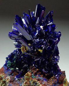 Azurite ~ El Cobra Mine, Mexico #mineral #crystal #myt