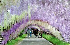 河内藤園(福岡県)