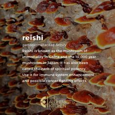 The reishi mushroom has been much revered as a healing ally for over 2000 years in parts of Asia. Nutrition Education, Health And Nutrition, Health And Wellness, Healing Herbs, Medicinal Herbs, Alternative Health, Alternative Medicine, Natural Health Remedies, Herbal Remedies