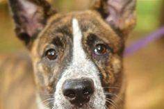 Animal rescue hero Stephanie Fariss needs a helping hand