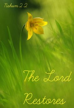 Nahum 2:2 Even though the destroyer has destroyed Judah,     the Lord will restore its honor. Israel's vine has been stripped of branches,     but he will restore its splendor.