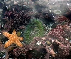 Victoria Beach Tide Pools Laguna Ca So Cal Cool Pinterest Best Ideas