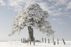 Photograph Laekvere pine by Meelis Riisenberg on 500px