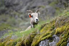 Baker County Tourism – basecampbaker.com Little Big Horn along the Hells Canyon Scenic Byway