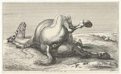 Jan van Huchtenburg   Gesneuveld paard, Jan van Huchtenburg, Adam Frans van der Meulen, unknown, 1674 - 1733   Paard liggend op de linkerzij van achteren gezien.