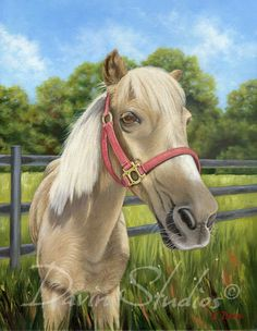 Shetland Pony in a field of clover giclee art by davinstudios