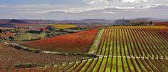 La Rioja (© Archivo fotográfico de la Ruta de la D.O. Rioja.)