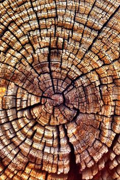 I love how the rings and cracks in this tree stump lead your eye in lots of different directions.