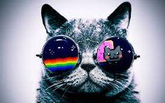 Resultado de imagem para nyan cat