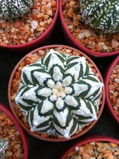 . cactus .