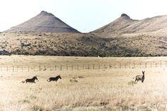 Samara Karoo Lodge -South African safari http://www.portfoliocollection.com/go/Samara-Private-Game-Reserve