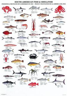 South American Fish & Shellfish