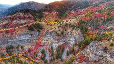 Logan Canyon transforms into hues of red, purple, yellow and so much more. Our World, Grand Canyon, Canyon Utah, Tourism, Flora, Scenery, Places, Nature, Purple Yellow