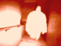 Ghost caught on thermal infrared camera .